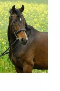 Meine Pferde - Donner