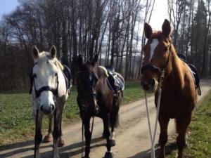 Reitunterricht mit meinen Pferden