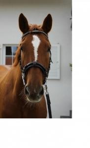 Meine Pferde - Wally